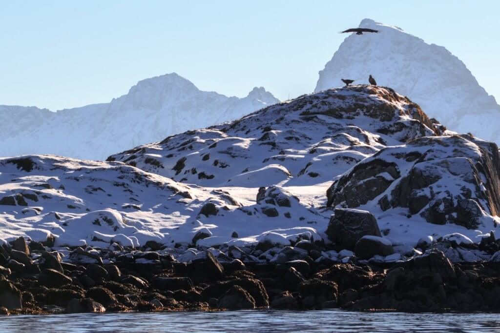 Zeearend Noorwegen
