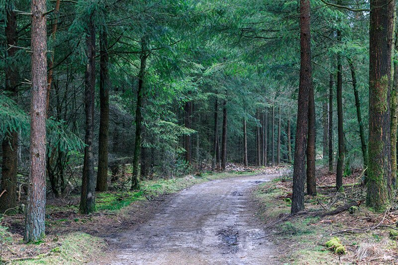 GPS Wandeling Hoge Veluwe 14km