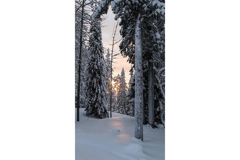 Dag 2: Sneeuwscootersafari