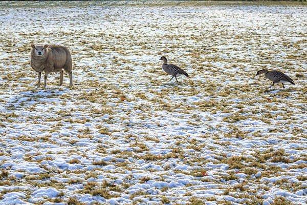 15km struinen door de weilanden van Zwartebroek