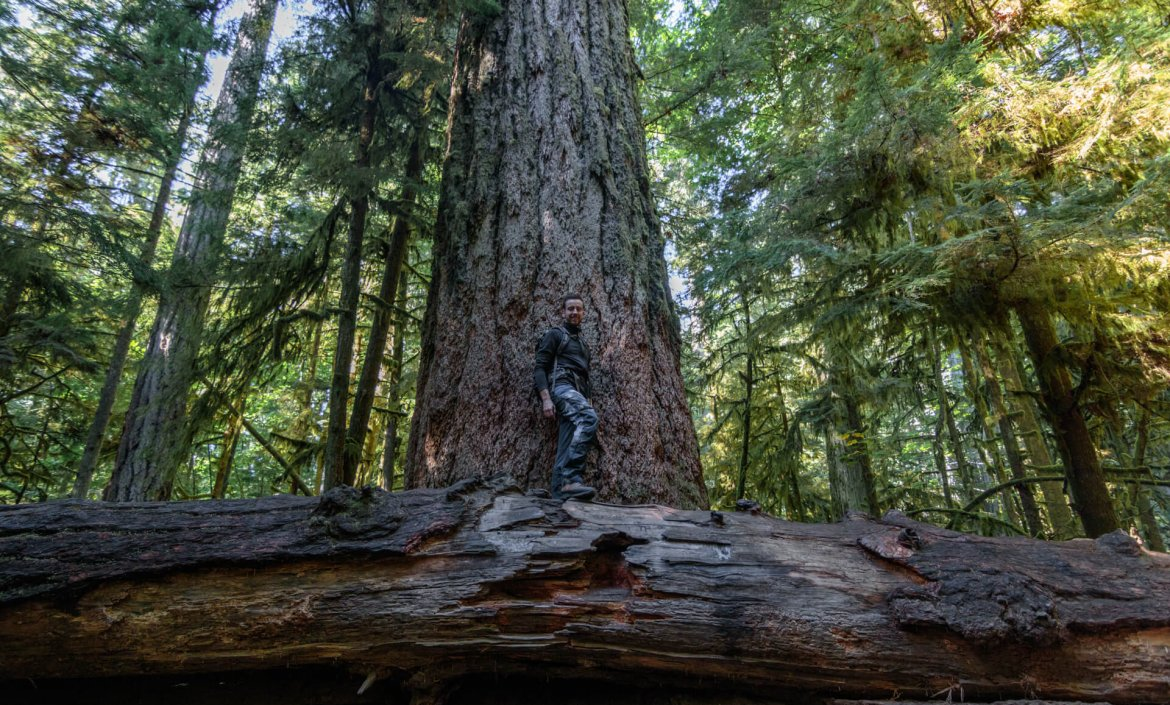 Grote bomen in Cathedral Grove