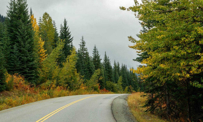 Bos, bergen en de prairie in Canada