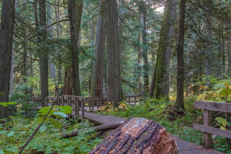 Giant Cedar Boardwalk