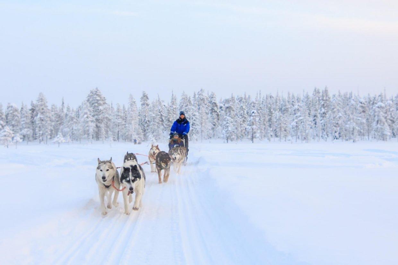 Huskytocht door Fins Lapland