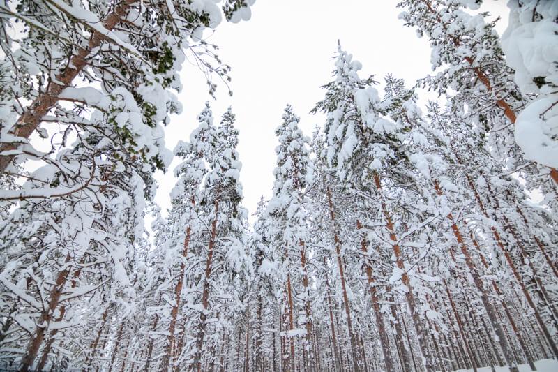 Langlaufen in Fins Lapland