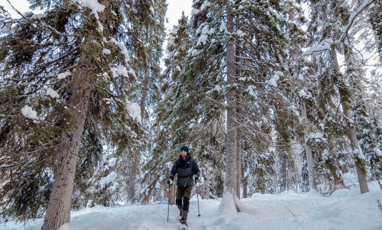 Sneeuwschoenwandelen in Oulanka National Park