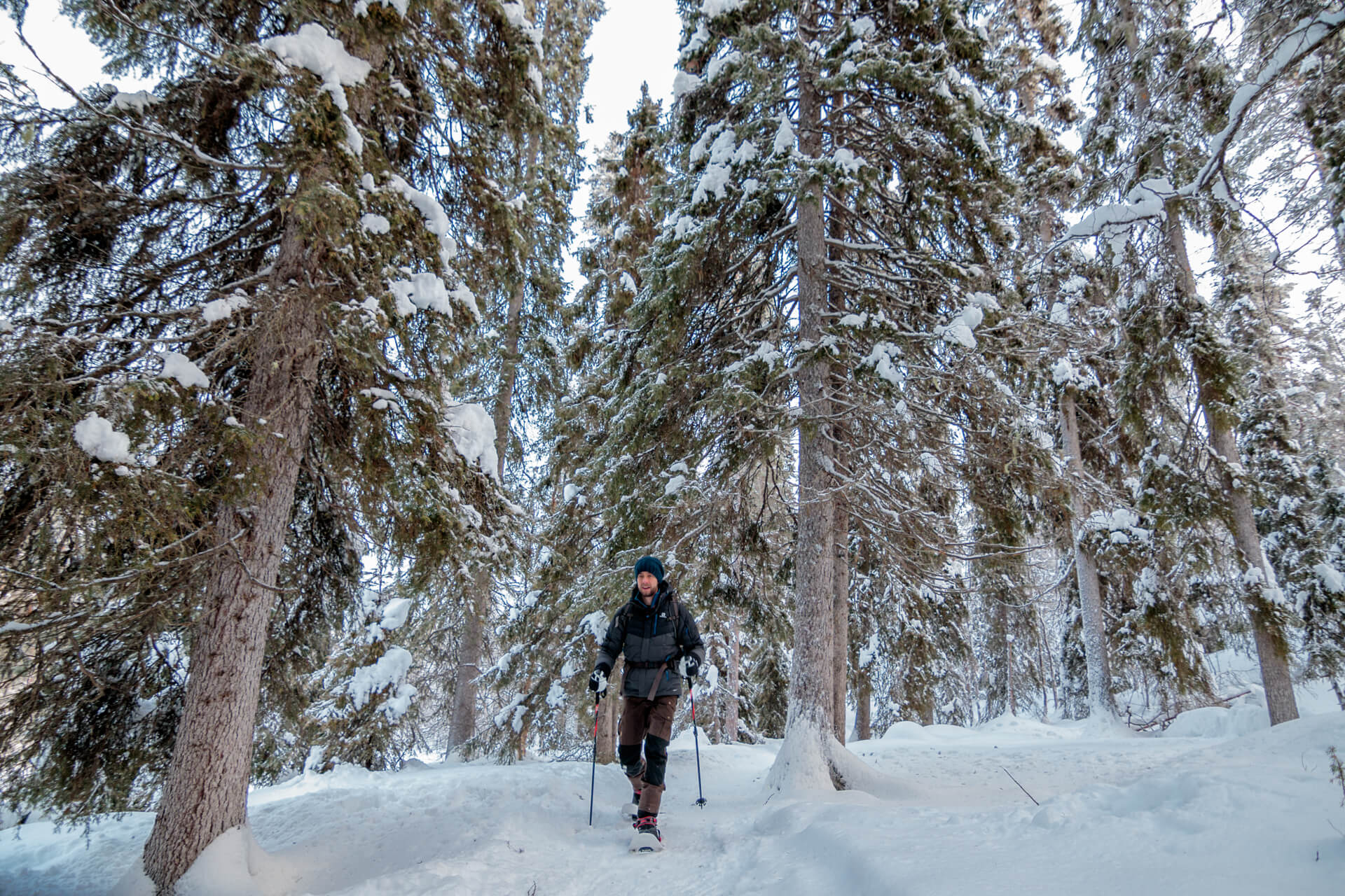 Sneeuwschoenwandeling in Oulanka National Park