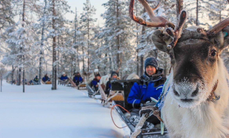 Rendiertocht door Fins Lapland