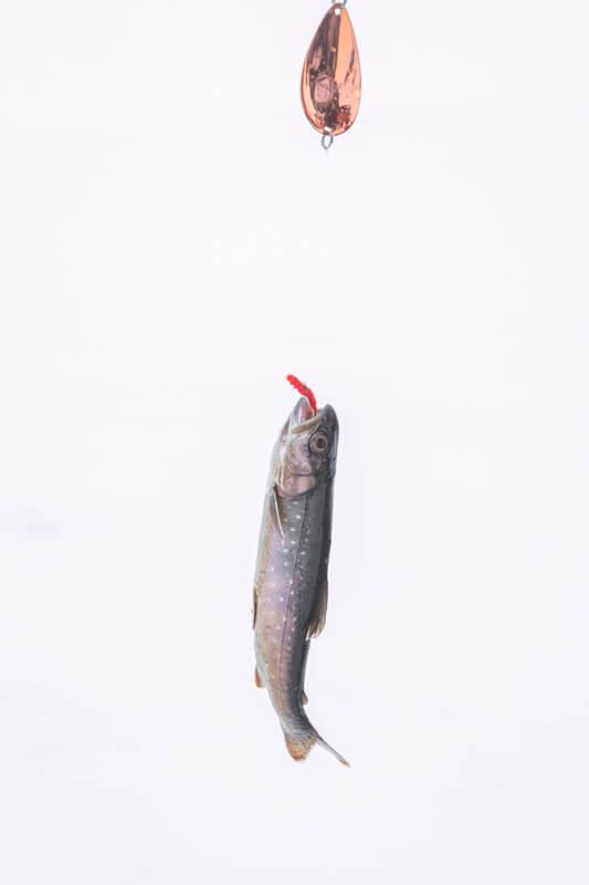Ijsvissen op Saanajärvi