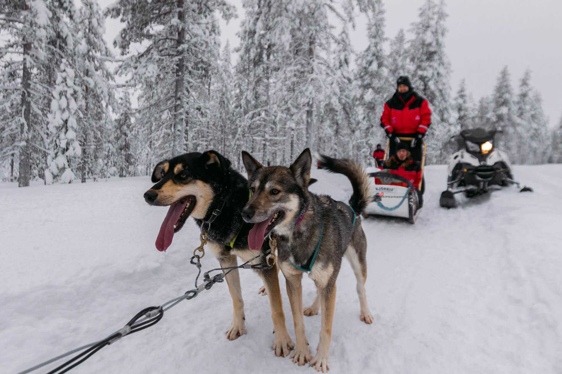 Huskysafari Luosto Lapland