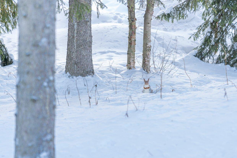 Winterwonderland Luosto Huskytocht